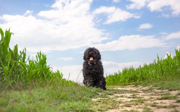 青空と草原のプーリー