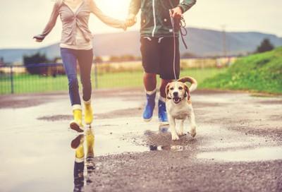 水たまりの近くを飼い主と散歩している犬