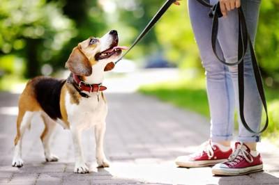 お散歩する犬
