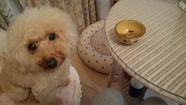 ジャーキーをおねだりしている愛犬