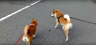 並んで歩く2匹