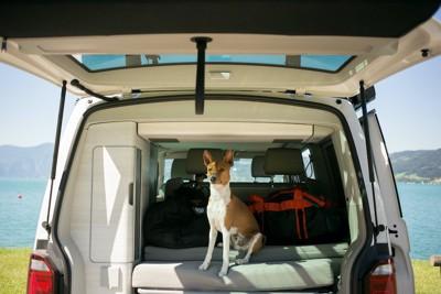 トランクの窓をあけた車に座っている犬