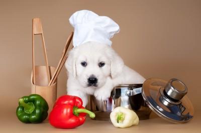 野菜とシェフの帽子を被った犬