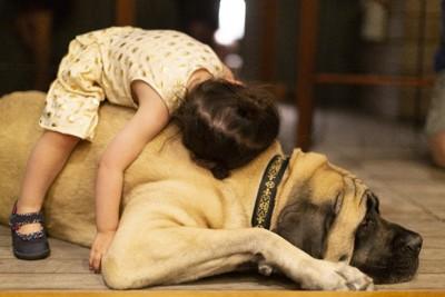 大型犬の上に乗る子供