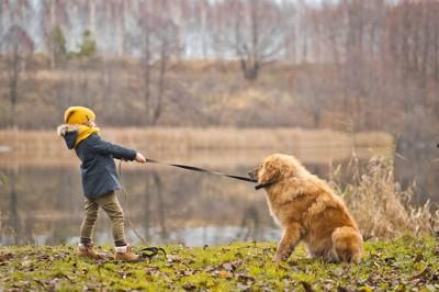 歩きたくない犬とリードを引っ張る子供
