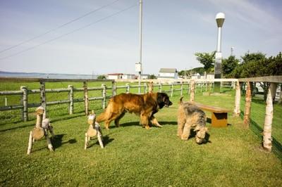 ドッグランで遊ぶ大型犬たち