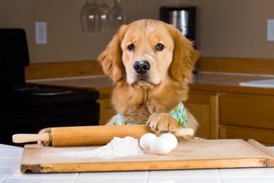 ゴールデンレトリーバーと小麦粉と卵