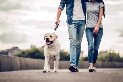 犬の散歩をする男女