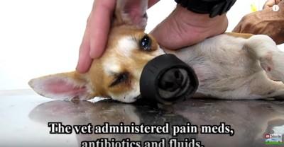 口輪をされた犬
