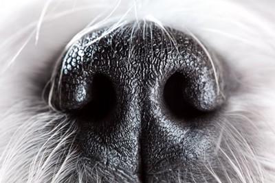 犬の鼻のクローズアップ