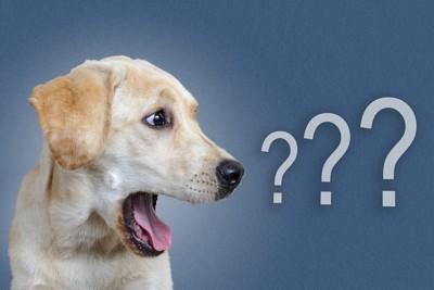 クエスチョンマークと白い犬