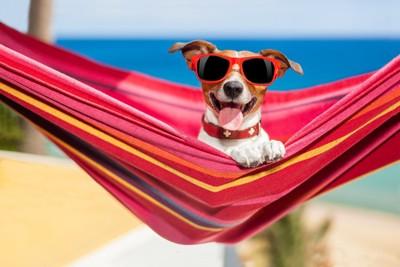 ハンモックに座るサングラスをした犬