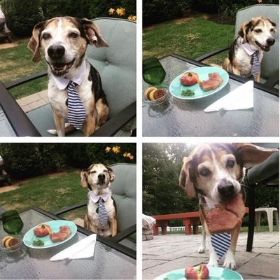 ステーキを楽しむ犬