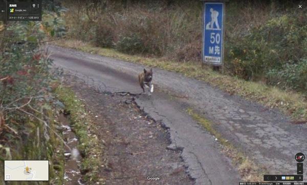 ストリートビューカーを追いかける犬