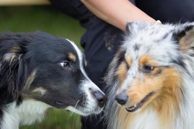 にらみ合う2匹の犬