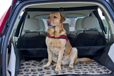 ペットドライブシートの上の犬