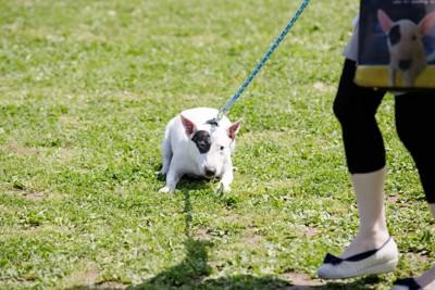 散歩を嫌がる犬