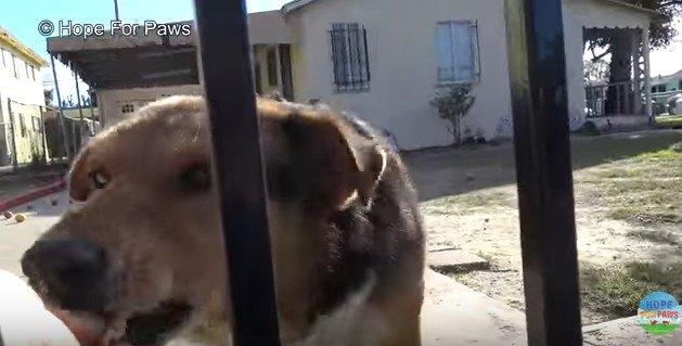 柵越しに食べ物をもらう犬