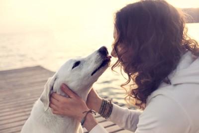 女性の顔を舐めようとする白い犬