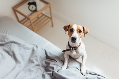 ベッドに足をのせ見つめる犬