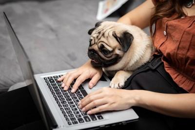 パソコンを使う女性とパグ