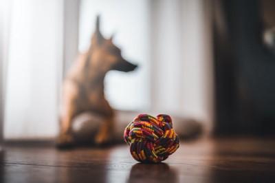 ロープをボールにしたおもちゃに見向きもしない犬