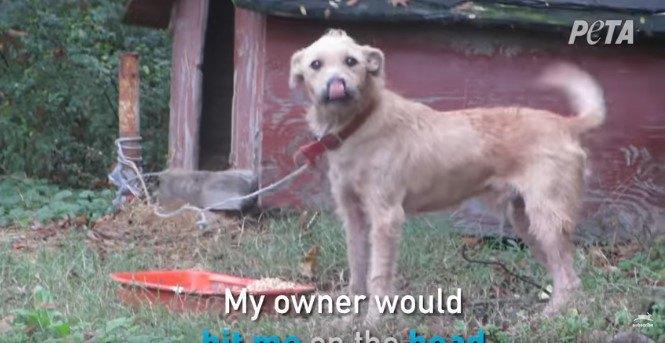鼻をなめる犬