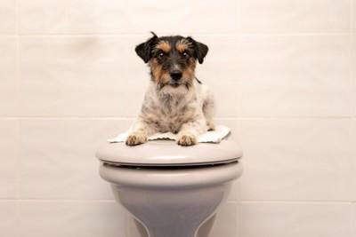 トイレに乗る犬