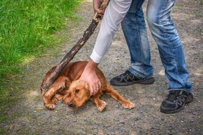 茶色い犬を押さえつけて木の棒を持った人の手