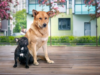 座る2頭の犬