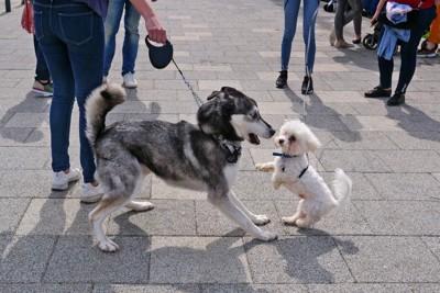 放し飼いの犬にビックリする犬