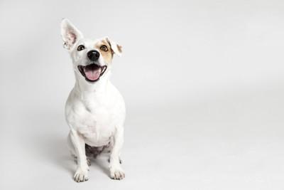 嬉しそうな表情で座る犬