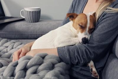 飼い主にくっついて眠る犬