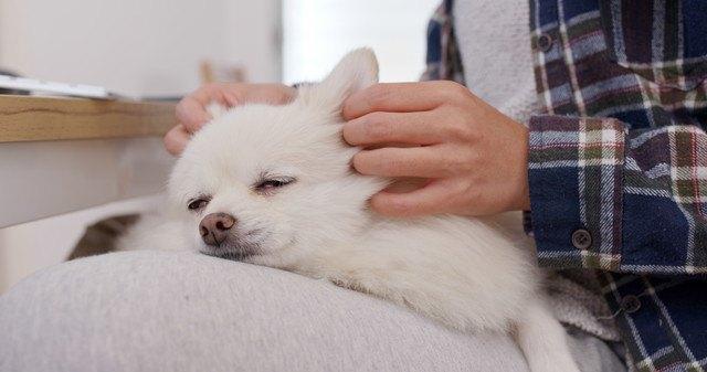 マッサージをされている犬の写真