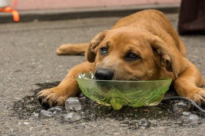 水に顎を乗せる犬