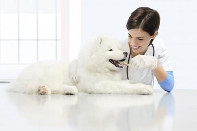 獣医さんにトリーツをもらう犬