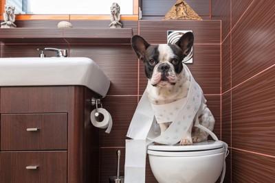 トイレと犬