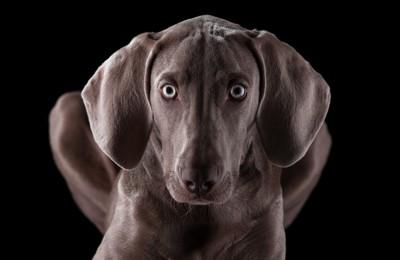 暗闇で目を見開く犬
