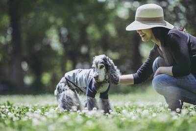 お花畑を散歩する老犬と女性