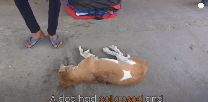 声をあげ助けを呼ぶ犬