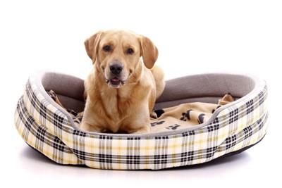 犬用ベッドの上で口を少し開ける犬