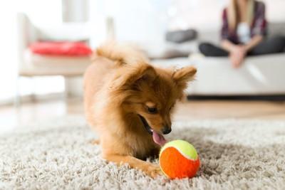 おもちゃで遊ぶ犬とソファーでくつろぐ飼い主