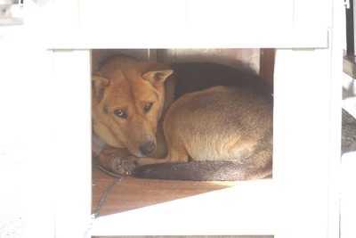 狭い小屋にいる犬 悲しげな表情