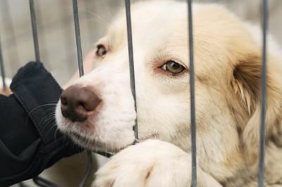 柵の中から顔を出している犬