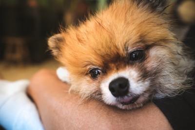 人の腕に抱かれる犬