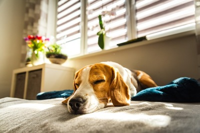 日光の当たる場所で眠る犬