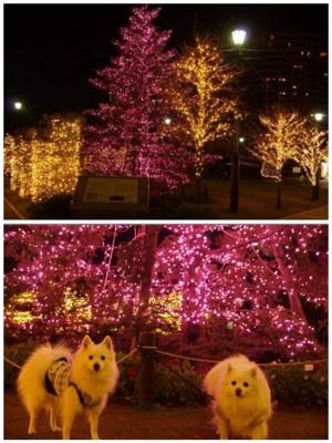 ライトアップされたツリーの前に犬