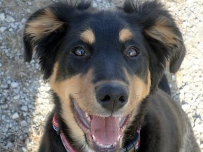 犬が幸せそうに見つめる姿