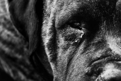 涙を流す黒い犬