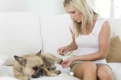 犬の介護をする女性